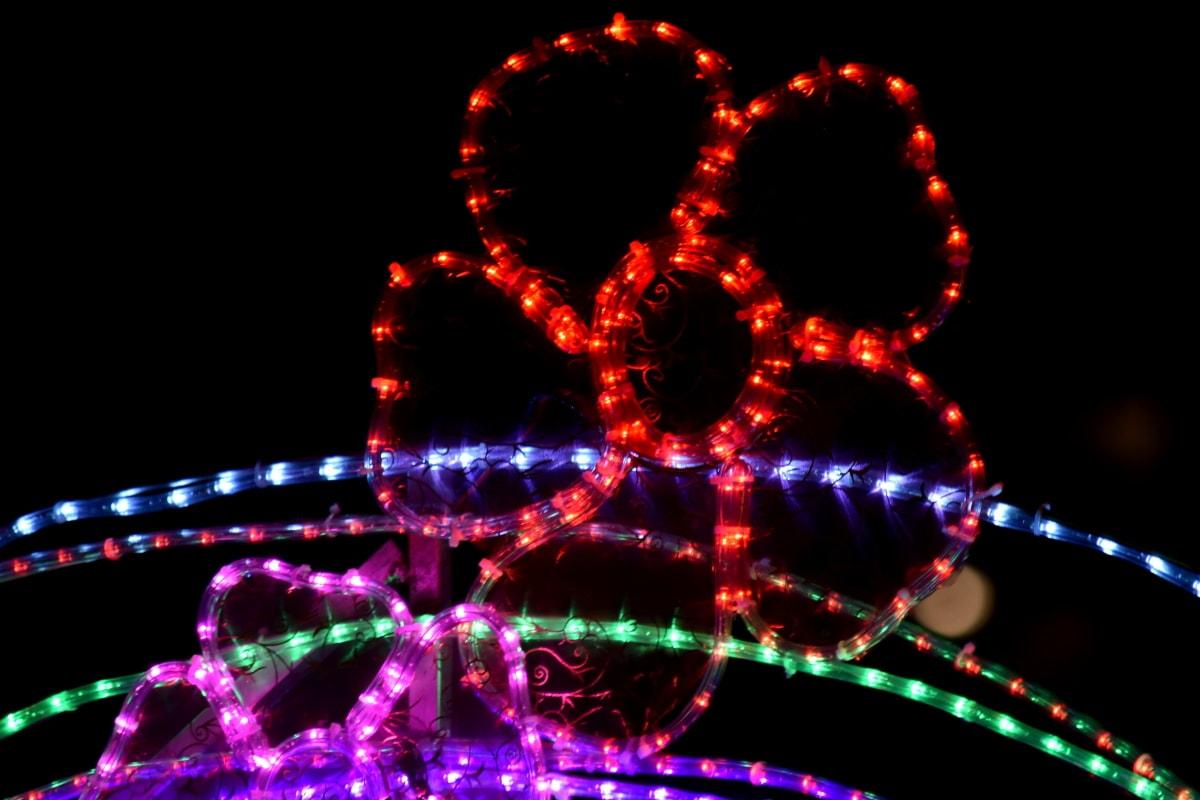 装饰, 电力, 花, 光, 霓虹灯, 摘要, 艺术, 黑, 明亮, 庆祝