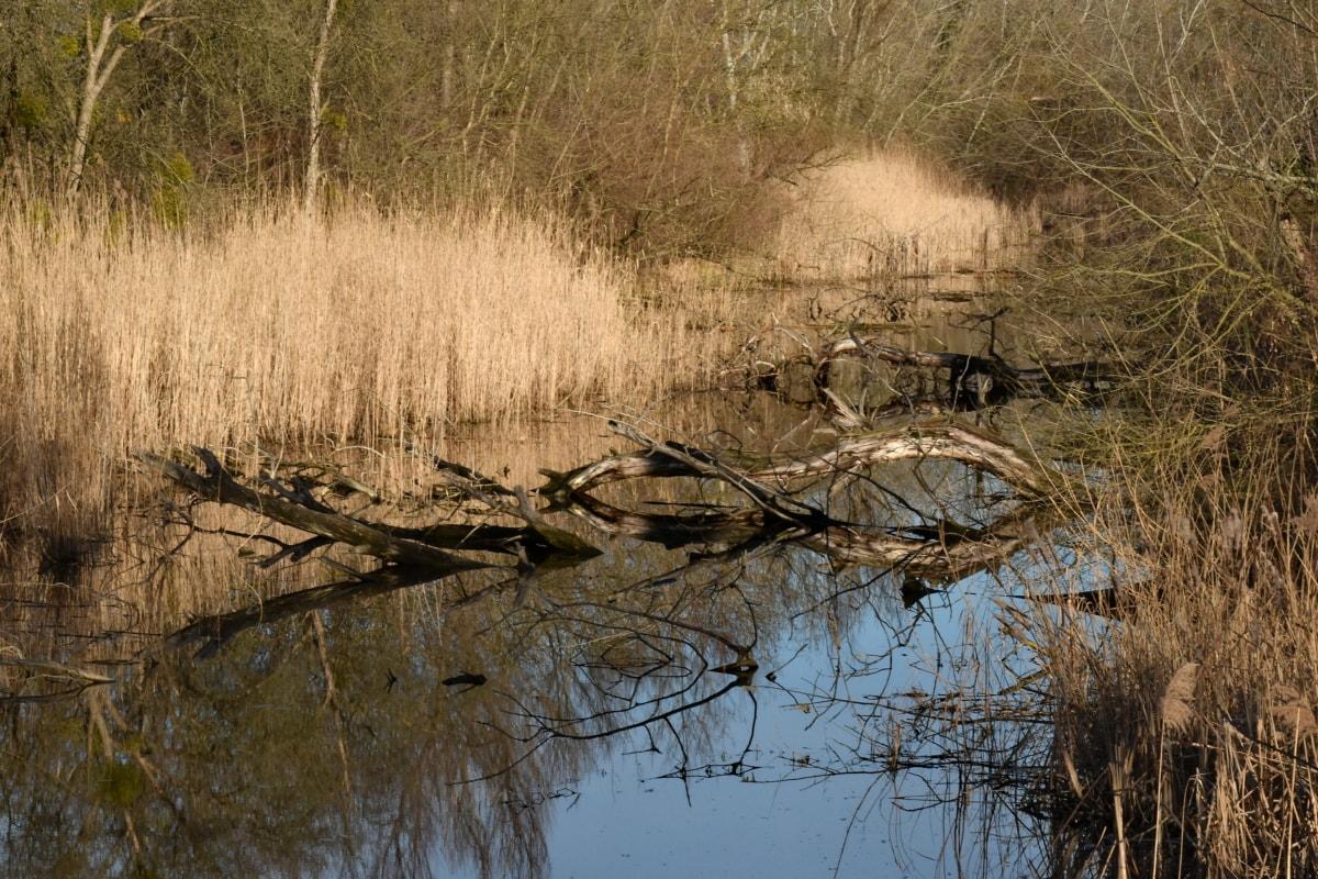 landscape, swamp, forest, river, lake, land, wetland, reflection, water, marsh