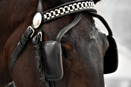 gear, horse, cavalry, leather, portrait, harness, belt, mare, equipment, strap