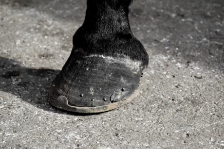 cast iron, craft, handmade, horse, horseshoe, leg, street, foot, ground, pavement