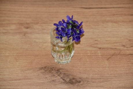 flower, glass, purplish, still life, water, wood, nature, wooden, flora, color