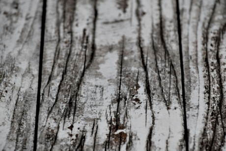 black and white, monochrome, paint, plank, timber, white, wood, bark, forest, texture