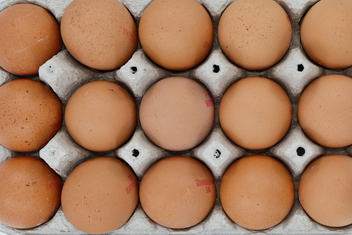 aereo, uovo, scatola delle uova, cibo, proteina, pollo, colesterolo, conchiglia, ingredienti, pollame