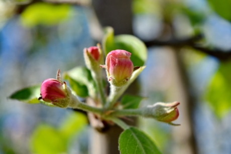 beautiful image, branches, flower bud, spring time, blossom, outdoors, plant, flower, nature, leaf
