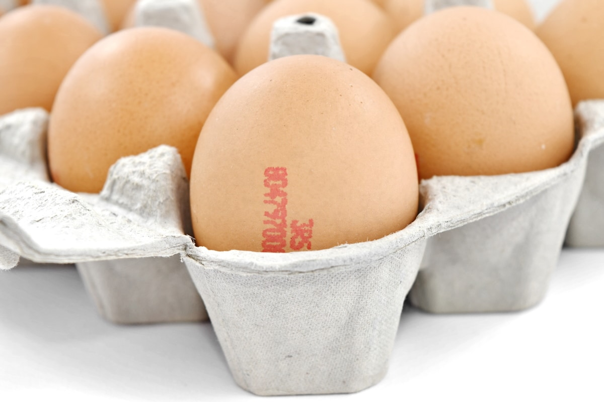 cardboard, carton, egg, egg box, eggshell, food, ingredients, cholesterol, breakfast, nutrition