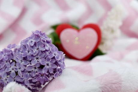 affection, beautiful flowers, beautiful image, blanket, elegance, heart, lilac, love, pink, purplish