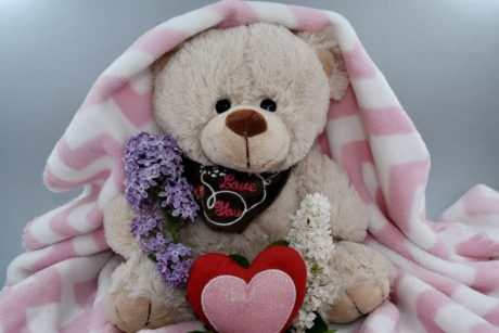 beautiful flowers, fragrance, love, romance, romantic, Valentine's day, teddy bear toy, toy, cute, scarf