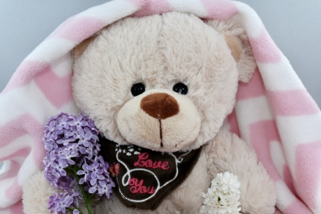 beautiful flowers, blanket, cute, doll, gifts, present, teddy bear toy, toy, comfort, love