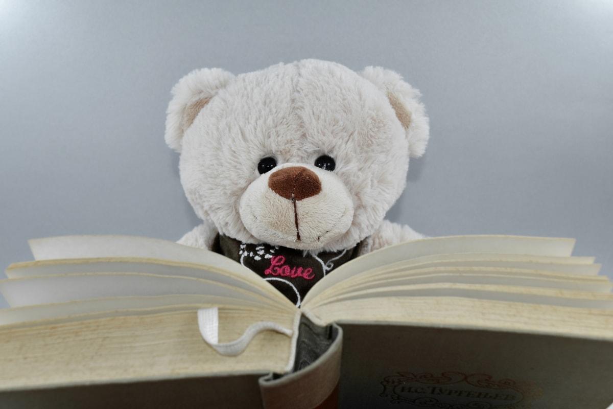 book, knowledge, literacy, reading, teddy bear toy, wisdom, toy, bear, cute, christmas