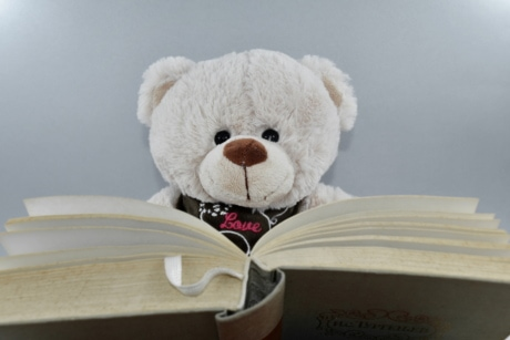book, knowledge, literacy, reading, teddy bear toy, wisdom, toy, bear, cute, christmas