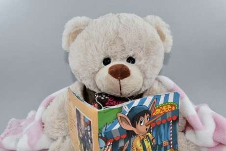 book, reading, teddy bear toy, bear, cute, winter, toy, funny, fun, fur