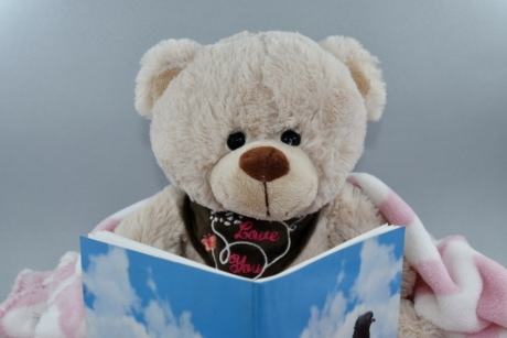 book, gift, reader, reading, teddy bear toy, toys, cute, toy, winter, fun