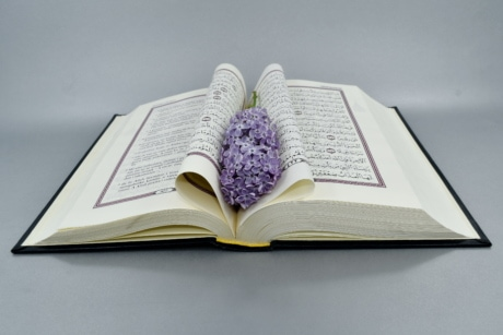 arabic, book, literature, knowledge, education, paper, library, page, school, wisdom
