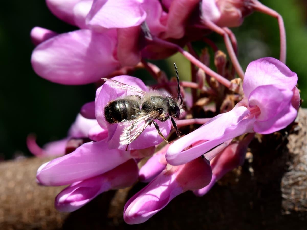 bee, details, honeybee, insect, metamorphosis, wings, nature, petal, arthropod, flower