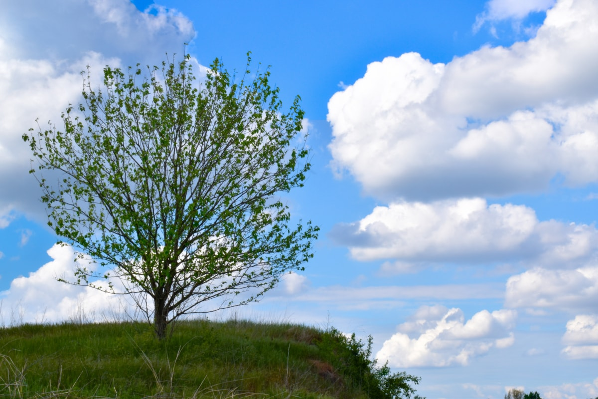alone, hillside, hilltop, lonely, tree, plant, landscape, nature, countryside, rural