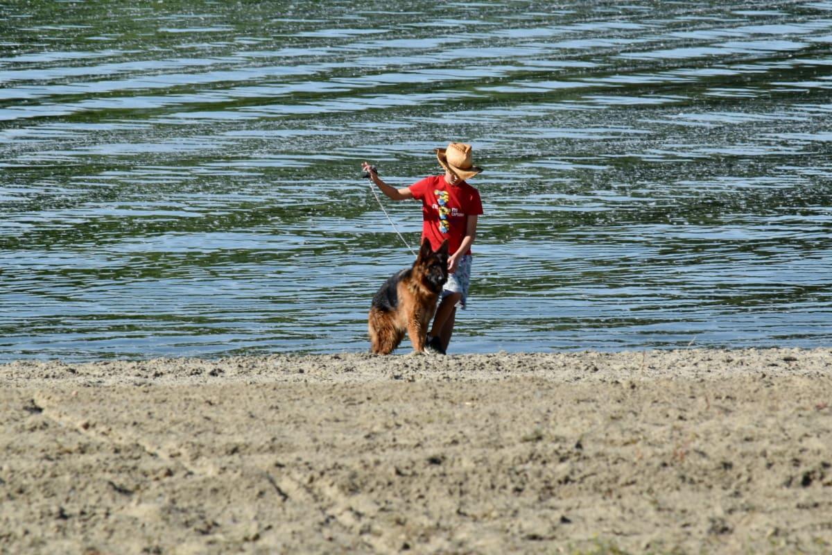 пляж, мальчик, воротник, собака, веселье, немецкий, отдых, овчарка, море, вода