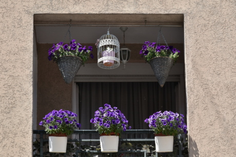 facade, balcony, architecture, flower, flowerpot, vase, interior design, window, house, geranium