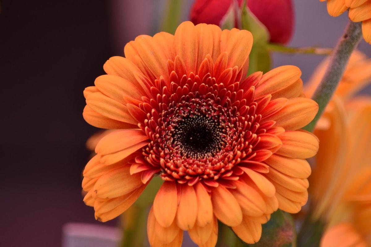 vakre blomster, nært hold, Orange gule, støvbærere, pollen, kronblad, blomstre, blomst, natur, flora