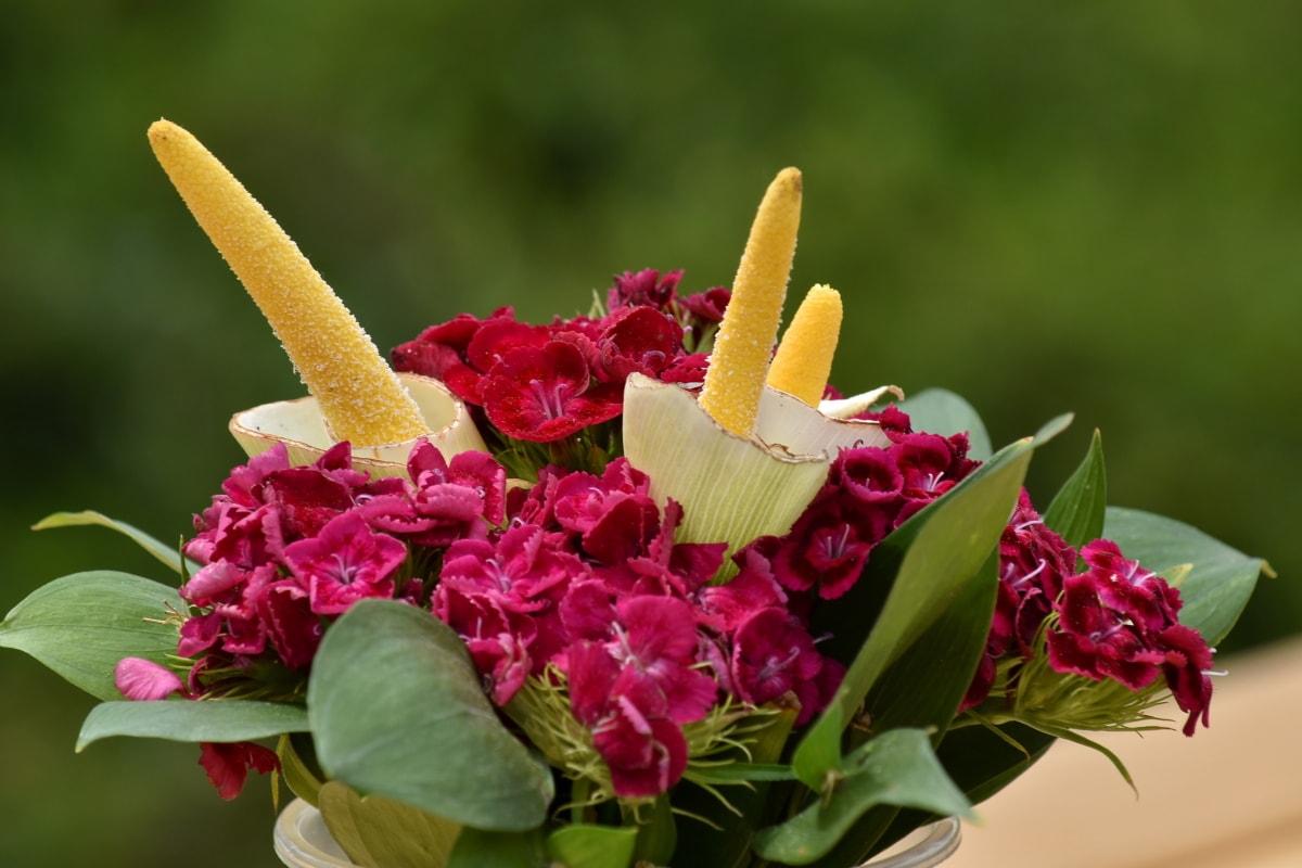 güzel çiçekler, güzel fotoğraf, buket, karanfil, dekorasyon, yeşil yaprakları, yaprakları, Pembemsi, pistil, kırmızımsı