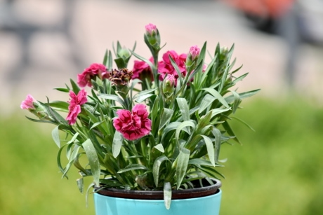 bouquet, carnation, flowerpot, green leaves, pink, vase, garden, nature, plant, flora