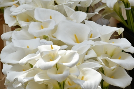 elegance, fragrance, white flower, nature, white, petal, flower, romance, love, leaf