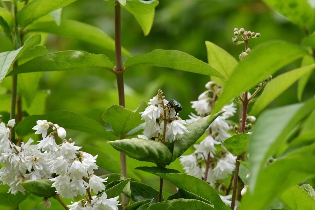 Käfer, Grün, grüne Blätter, Insekt, Strauch, Frühling, Blumen, Natur, Blume, Anlage