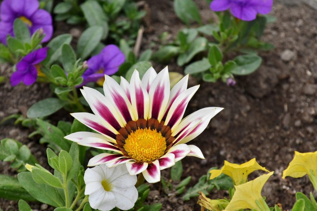 zemin, yaprakları, Pembemsi, beyaz çiçek, Yaz, doğa, bitki, çiçeği, flora, Bahçe