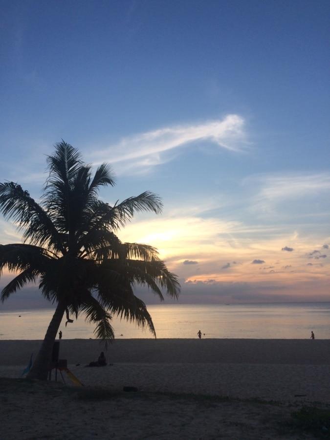 plajă, cer albastru, nucă de cocos, Palm, paradis, oameni, silueta, apus de soare, copac, mare