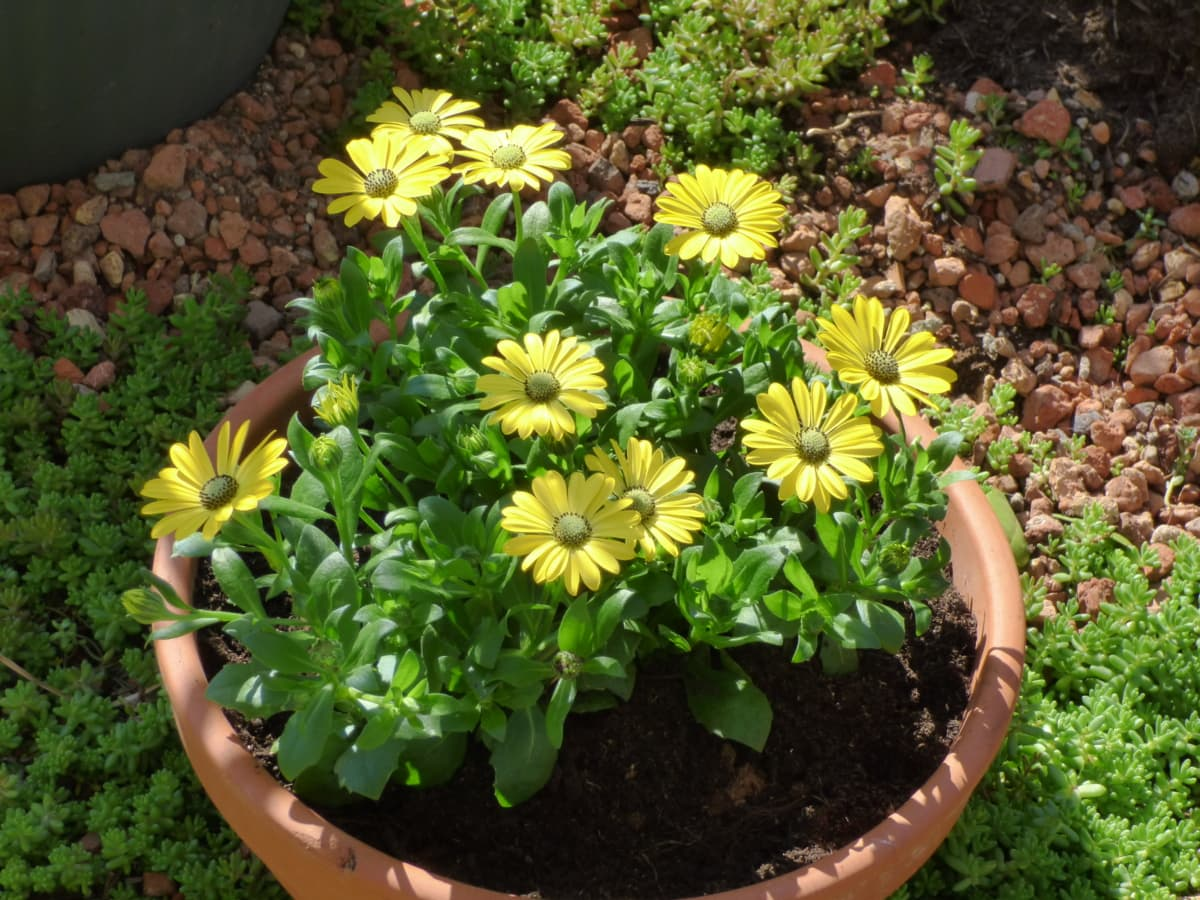 Кераміка, вазон, зеленувато-жовтий, контейнер, квіти, квітка, завод, сад, Садівництво, літо