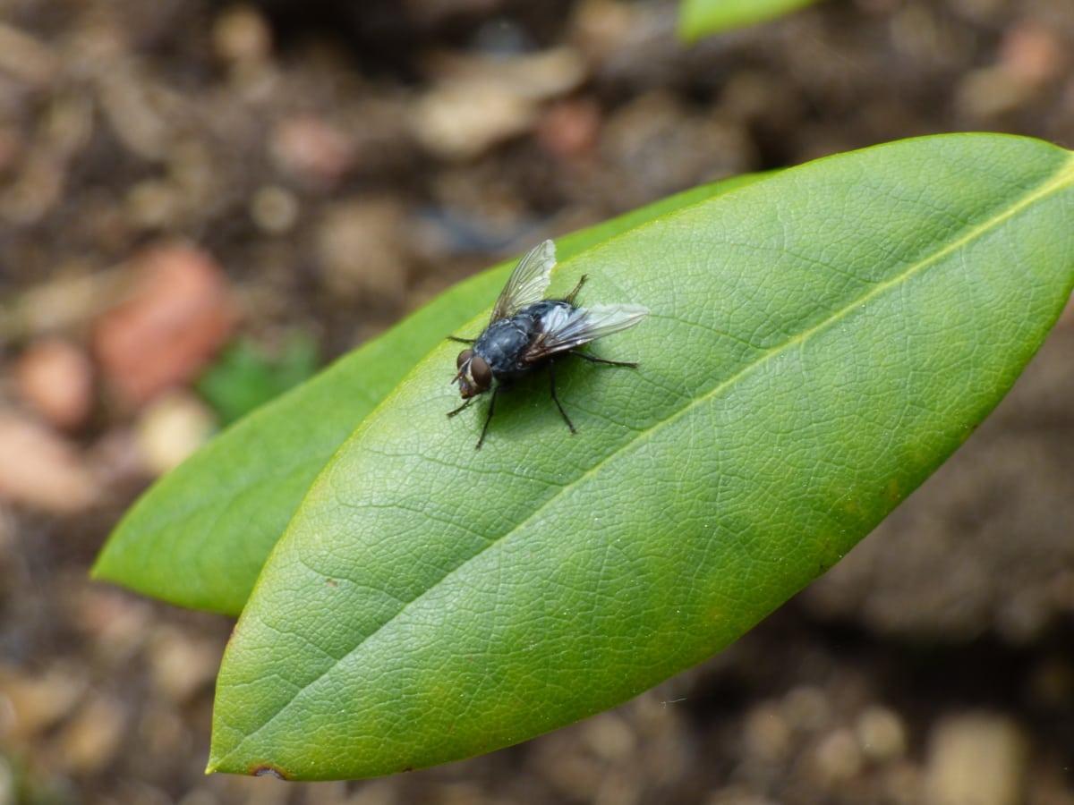 lähietäisyydeltä, Vihreät lehdet, hyönteinen, siivet, lehti, vika, niveljalkaisten, luonto, selkärangattomat, lähikuva