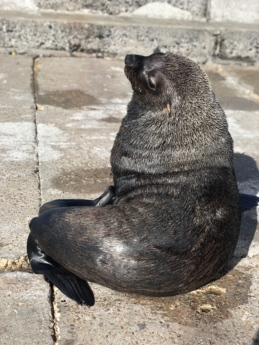 sea lion, wildlife, nature, animal, fur, wild, rock, sea, outdoors, cute