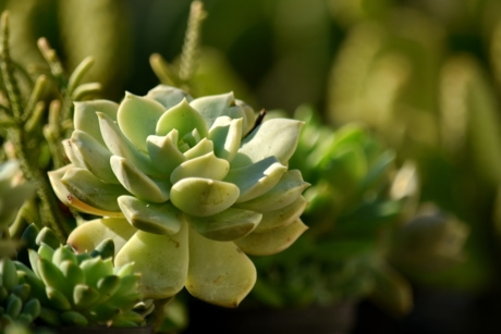 blurry, green leaves, nature, flora, plant, cactus, flower, leaf, garden, outdoors