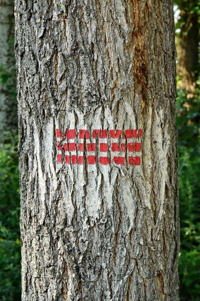 marque, marqueur, marquage, signe, symbole, arbre, forêt, bois, Pierre tombale, arbres