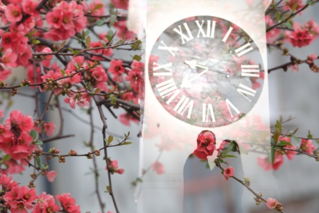 analog clock, bride, groom, photography, photomontage, spring time, time, clock, nature, cherry