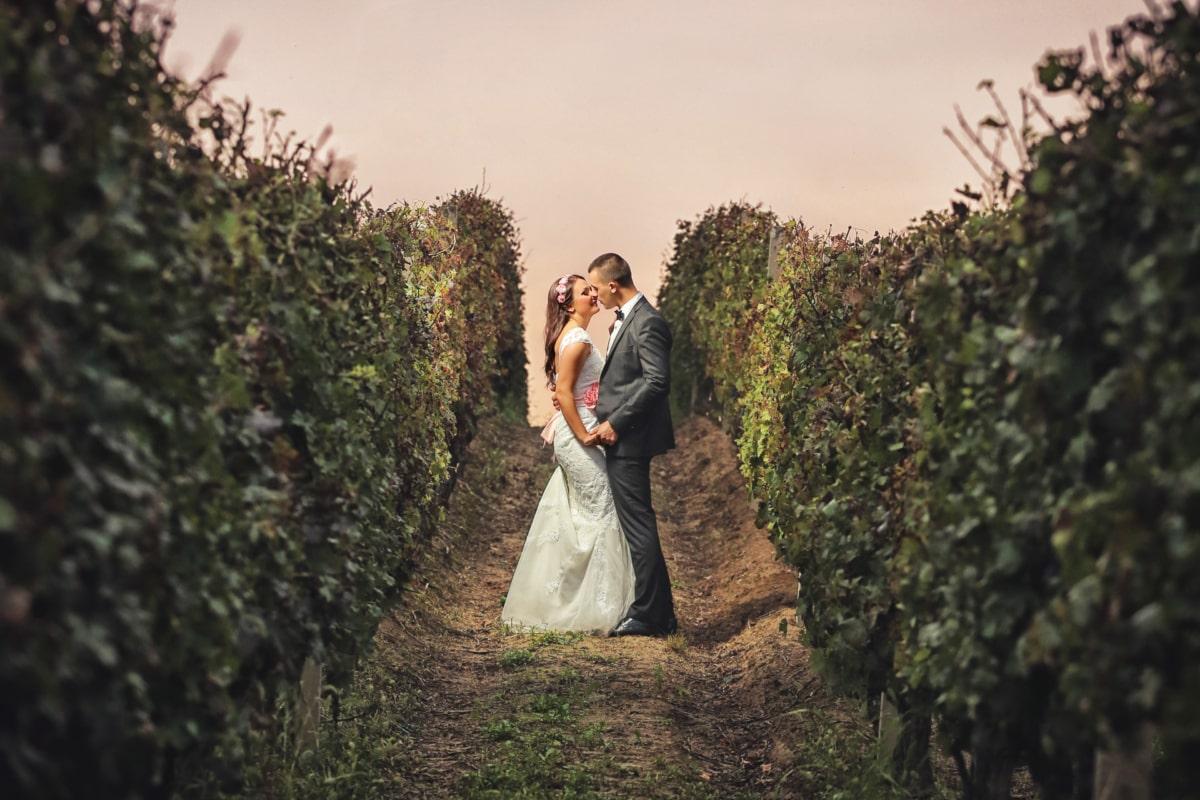 신랑, 포옹, 키스, 사랑, 로맨스, 포도 원, 아내, 참여, 신부, 드레스