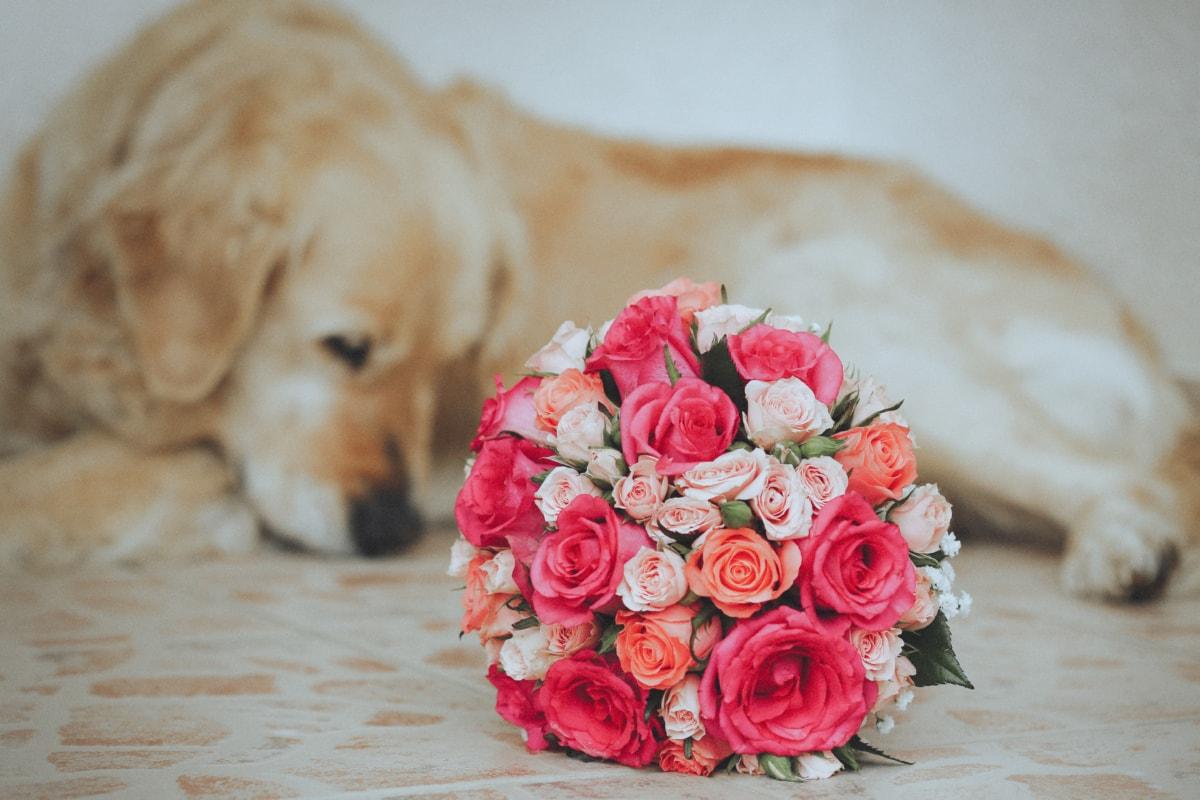 animal, bouquet, dog, romantic, rose, arrangement, flower, romance, roses, decoration