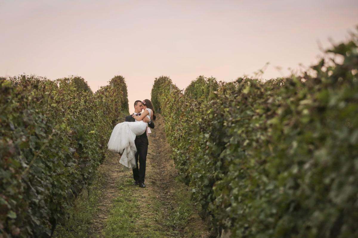 la mariée, jeune marié, colline, Holding, romantique, coucher de soleil, vignoble, arbre, paysage, à l'extérieur