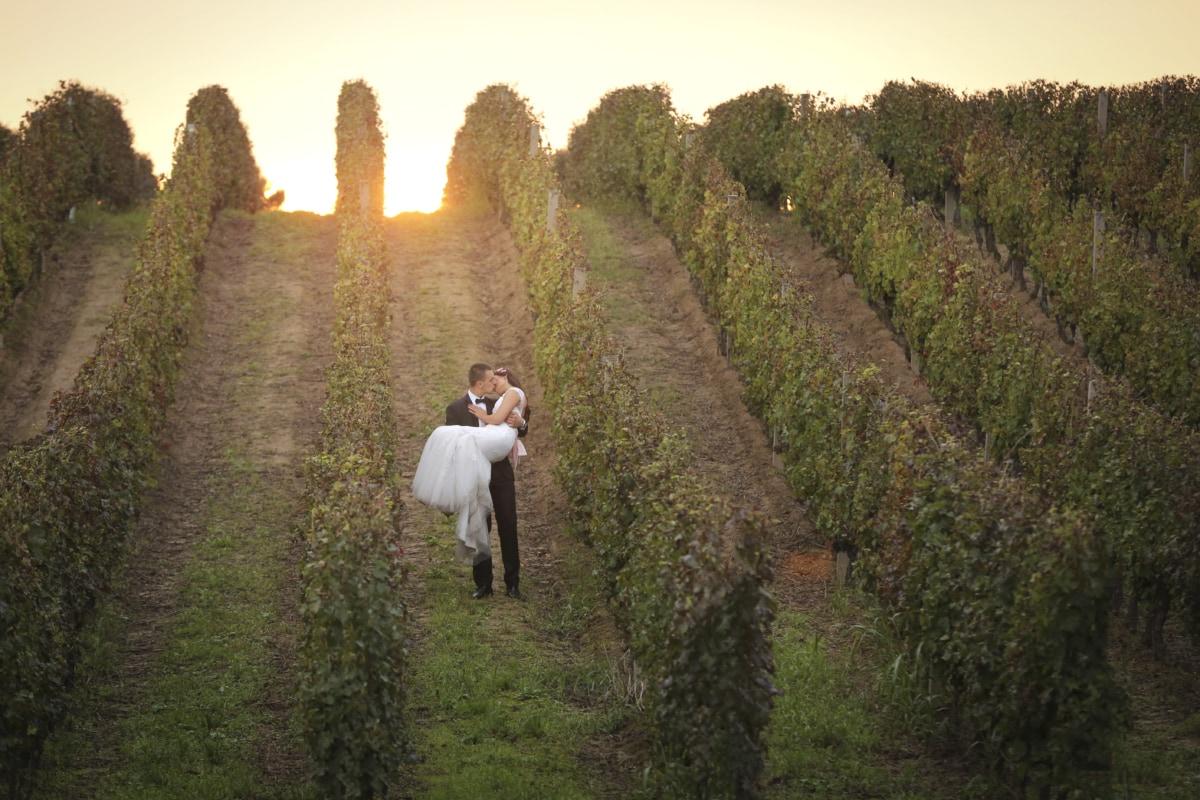 νύφη, γαμπρός, πλαγιά, Φιλί, ηλιοβασίλεμα, Αμπελώνας, τοπίο, βουνό, δέντρο, βουνά