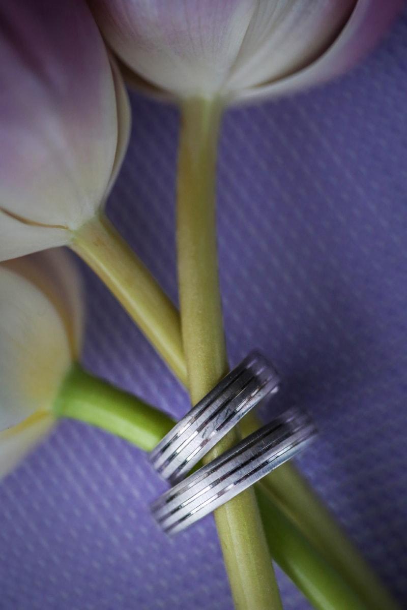 flower bud, flowers, jewelry, love, rings, tulips, wedding, wedding ring, flower, leaf