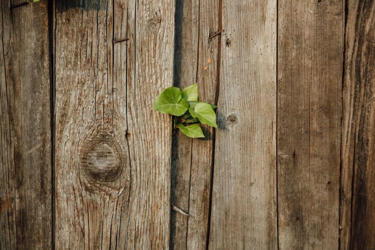 изоставени, ограда, зелени листа, бръшлян, стар, ограда от колове, дървен материал, необработен, дървени, дърво жаба