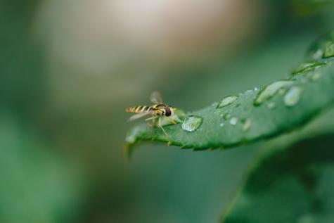 นิเวศวิทยา, ความบริสุทธิ์, ฝน, น้ำฝนเพิ่ม, ปีก, แมลง, สัตว์ขาปล้อง, กระดูกสันหลัง, ข้อผิดพลาด, มดตะนอย
