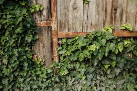 放弃, 木工, 栅栏, 手工, 常春藤, 锈, 叶, 墙上, 木材, 木