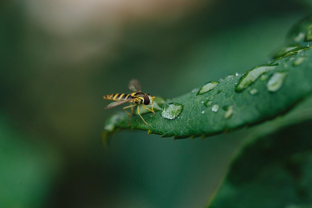 รายละเอียด, น้ำค้าง, ใบสีเขียว, แมโคร, ความชื้น, ฝน, น้ำฝนเพิ่ม, มุมมองด้านข้าง, มดตะนอย, เปียก