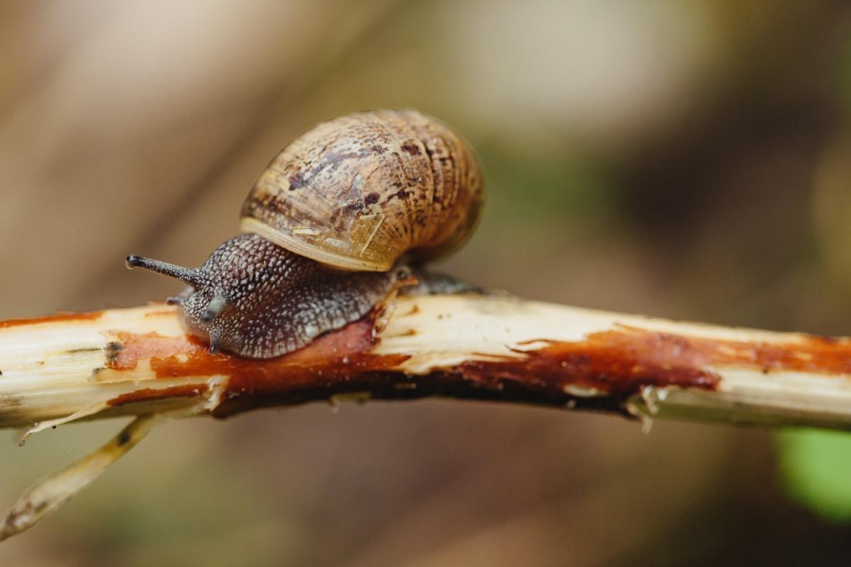 helt tæt, ensom, flytte, enkelt, hud, Slim, sneglen, havsnegle, haven, hvirvelløse