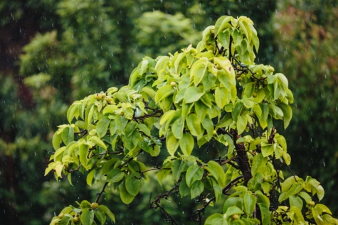 rain, raindrop, leaf, tree, plant, leaves, spring, foliage, summer, forest