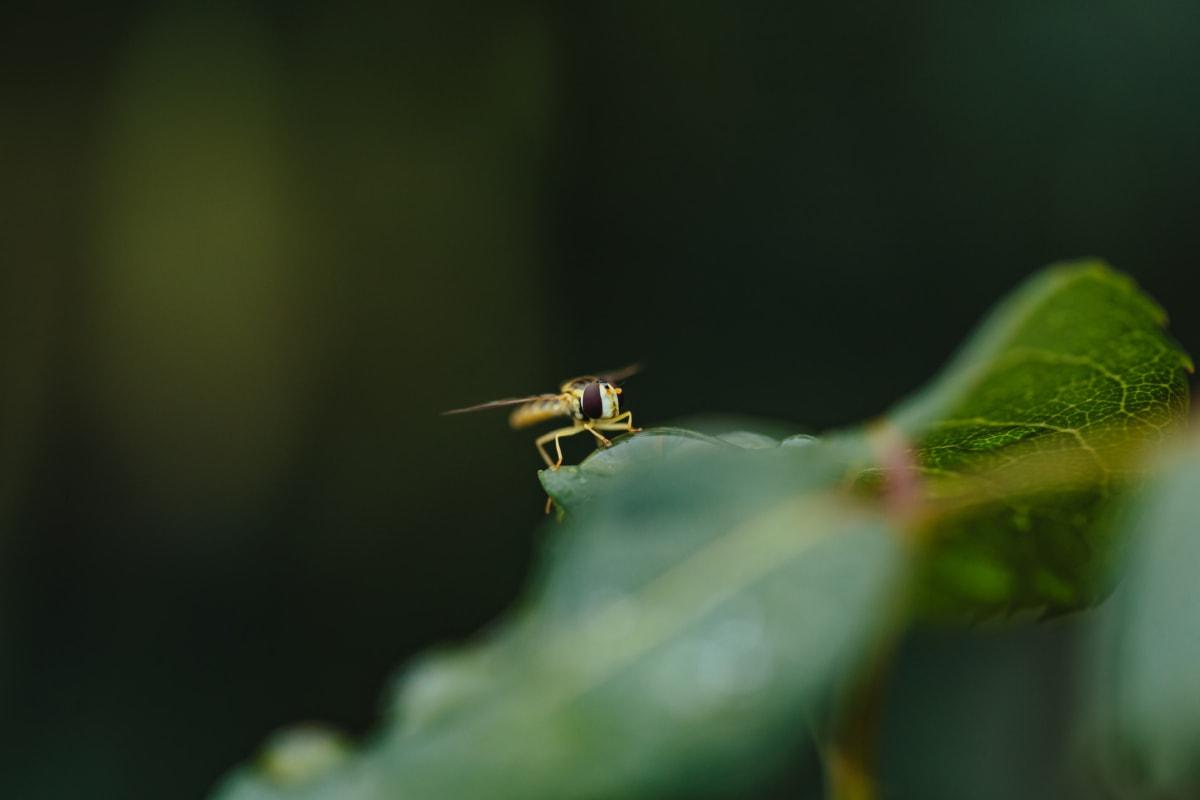 blurry, wasp, bug, insect, invertebrate, nature, arthropod, leaf, outdoors, wildlife