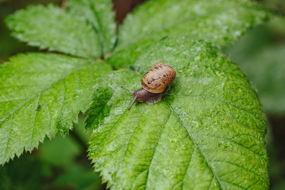 露, 水分, 雨, 雨滴, 雨季, 湿, 蜗牛, 昆虫, 性质, 足