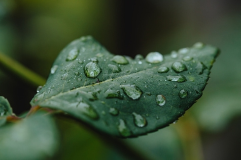 dauw, groene bladeren, vocht, regen, nat, blad, plant, water, gras, detailopname