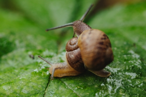 zeleno lišće, zreli, vlaga, sluz, puževi, mokro, mekušac, priroda, biljni i životinjski svijet, beskralješnjak