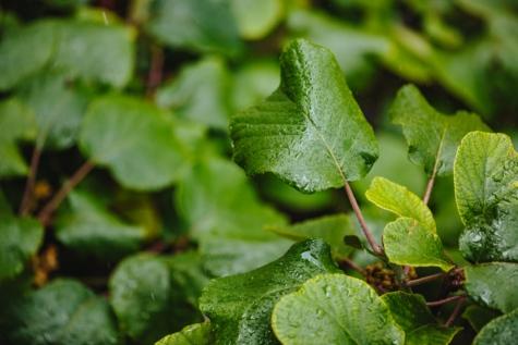 groen gras, groene bladeren, blad, plant, kruid, natuur, flora, voedsel, nat, buitenshuis